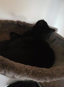 Kratzbaum, schlafender Sam